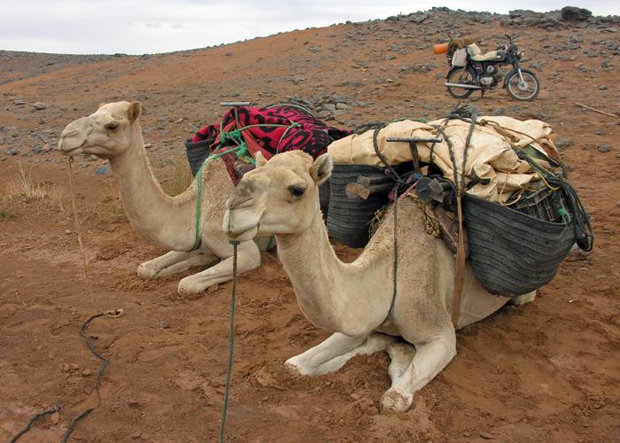 KLS Maroc 2012 (46)reduite