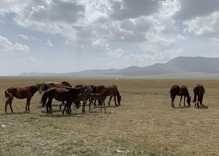 Kirghisistan 700×500 (12)