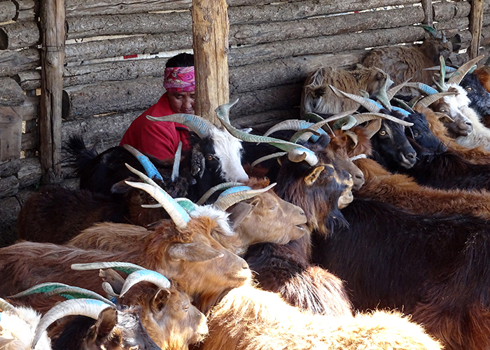 Mongolie 700×500 (11)